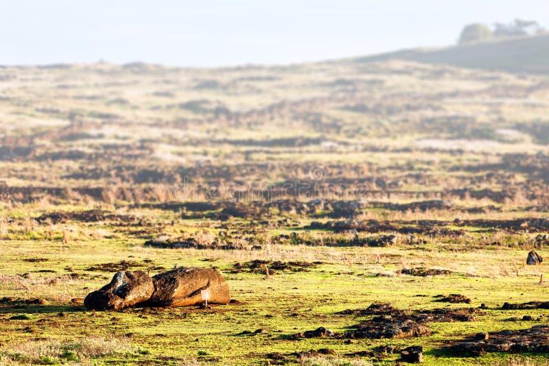 Gefallenes moai auf einem Feld in der Osterinsel lizenzfreie stockbilder