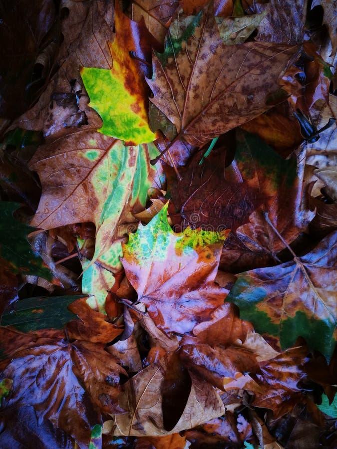 Gefallenes Phoenix-Baumblatt, das auf nassem Boden liegt lizenzfreie stockfotografie