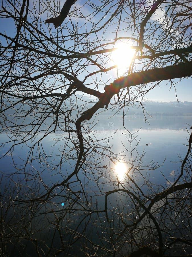 gefallenes Reflektieren der BaumMeerwasser-Sonne Sommer lizenzfreies stockbild