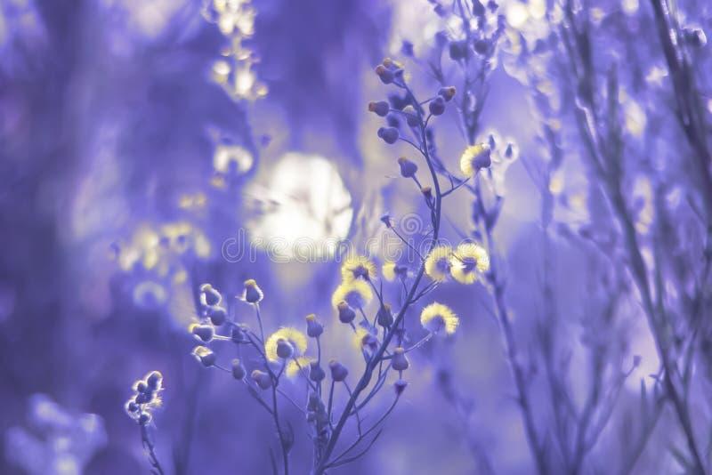 Gefiederte Wildflowers in Dämmerung ` s Licht