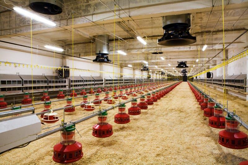 Geflügelfarm stockbilder