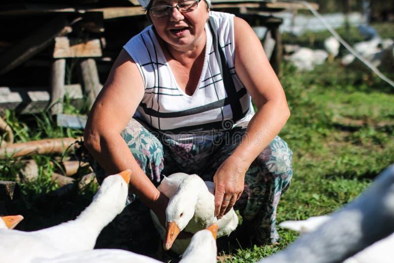 Geflügelfarm - Fütterungsgänse einer Frau lizenzfreies stockbild