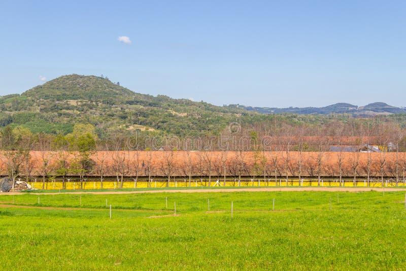 Geflügelfarm in Gramado stockfotografie