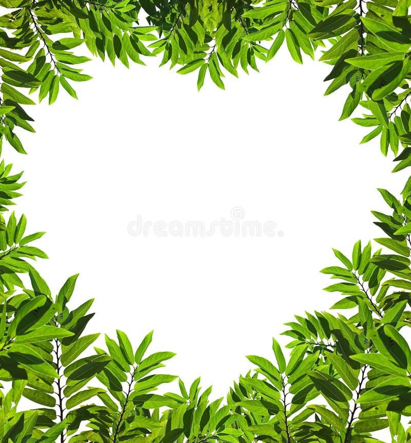 Geformte Blätter des Inneren stockfoto