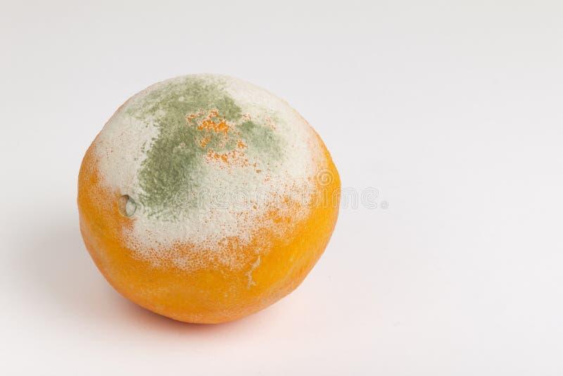 Geformte Orange stockbild