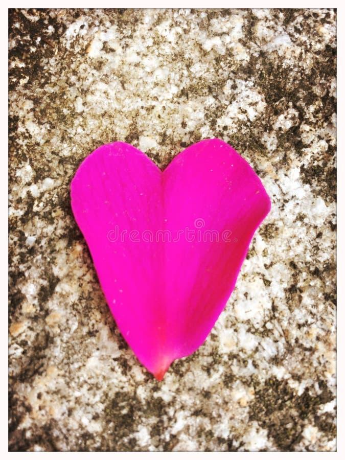 Geformtes Blumenblatt des Herzens auf Stein stockbilder