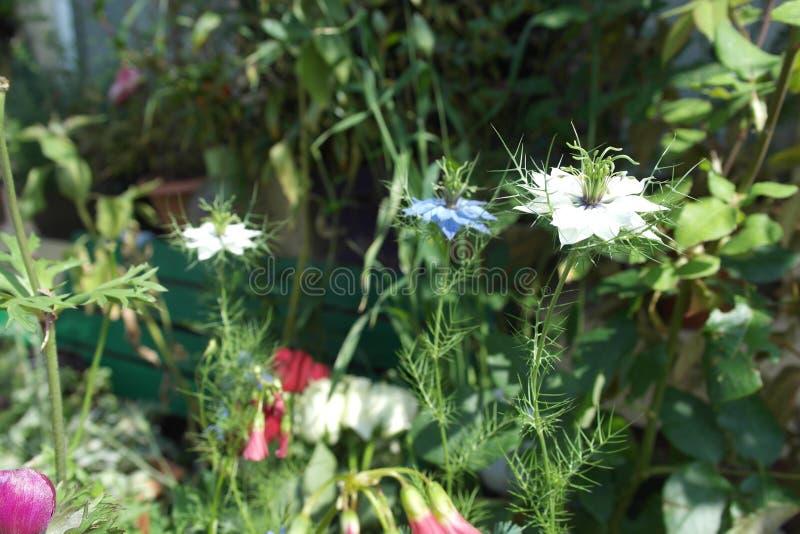 Gefrieren auf dem Garten lizenzfreies stockfoto