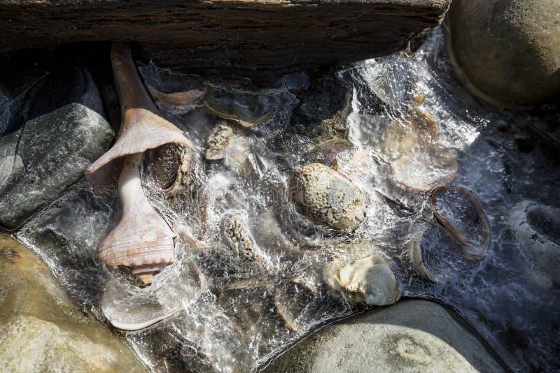Gefrieren Sie auf Oberteilen an den Silber-Sanden auf den Strand setzen, Milford, Connecticut stockfoto
