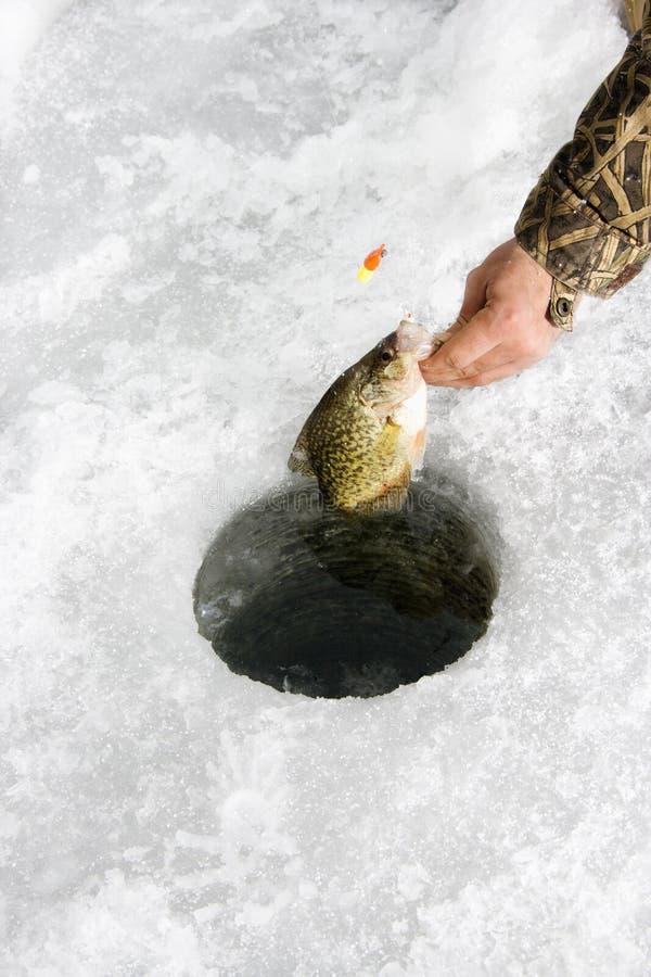 Gefrieren Sie Fischen stockbild