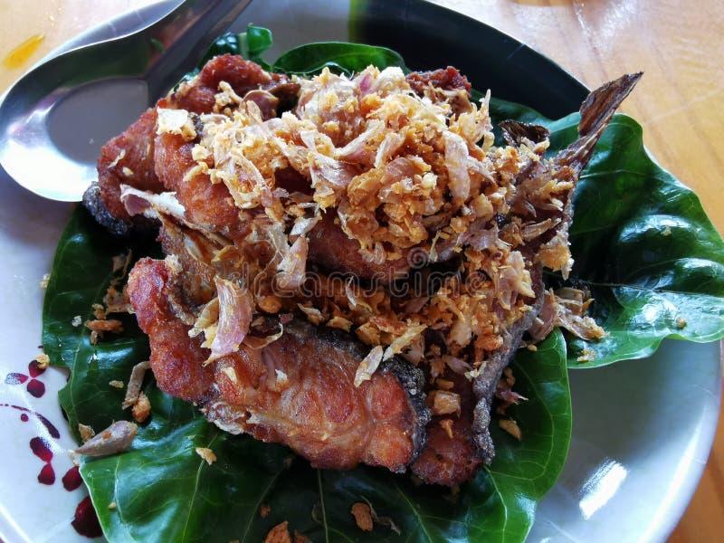 Gefrituurde Aziatische redtailkatvis met vissensaus en knoflook royalty-vrije stock afbeeldingen