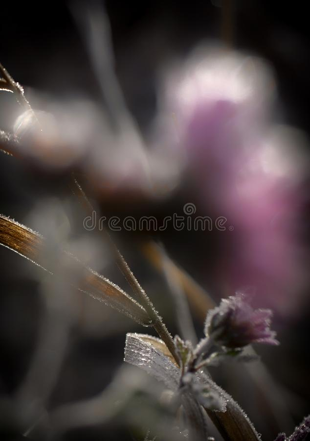 Gefrorene Blume stockfotos