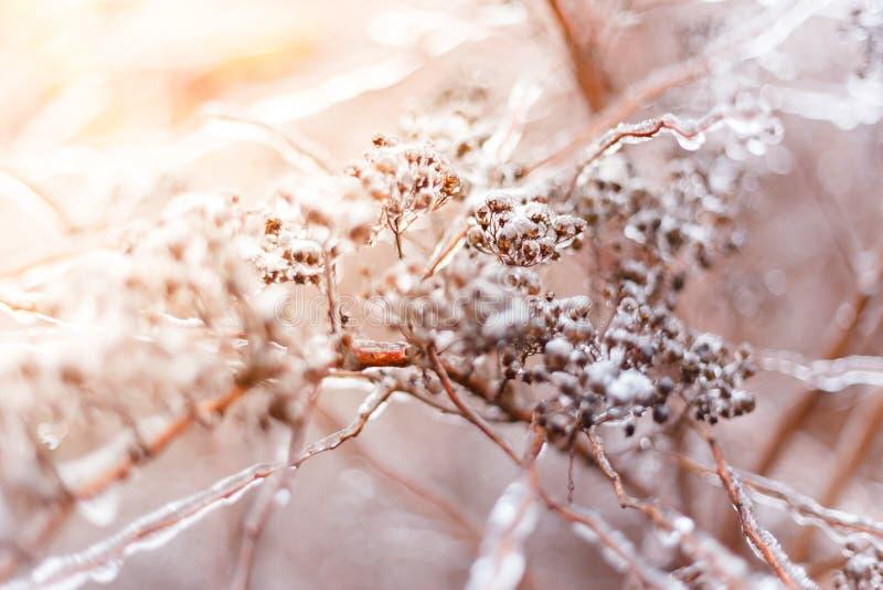 Gefrorene Buschniederlassung während des Winters mit starker Schicht Eis stockfotos