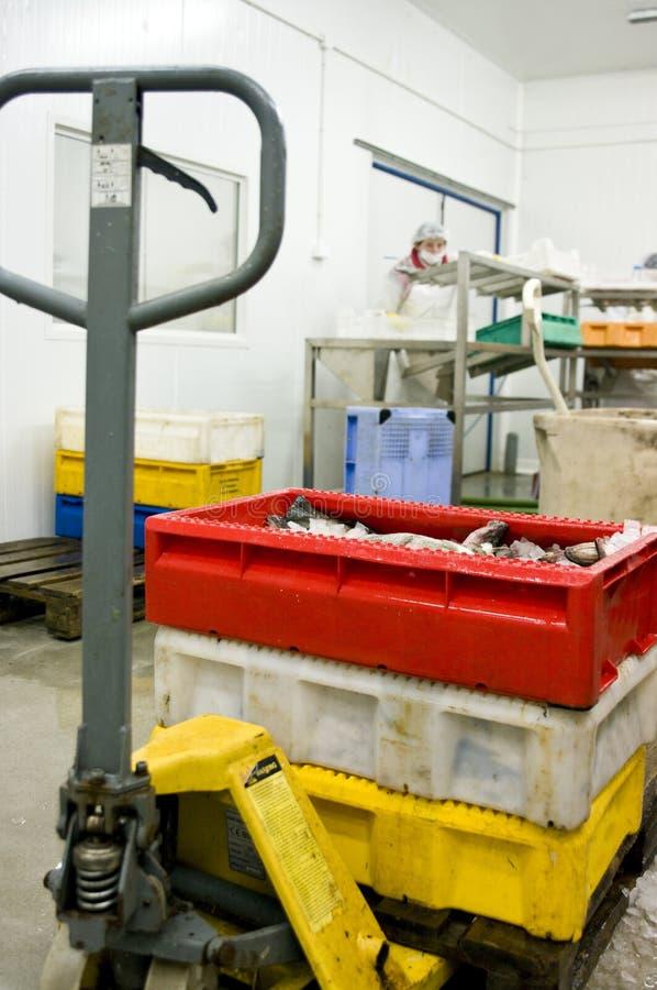Gefrorene Fische an Verarbeitungsanlage lizenzfreie stockbilder