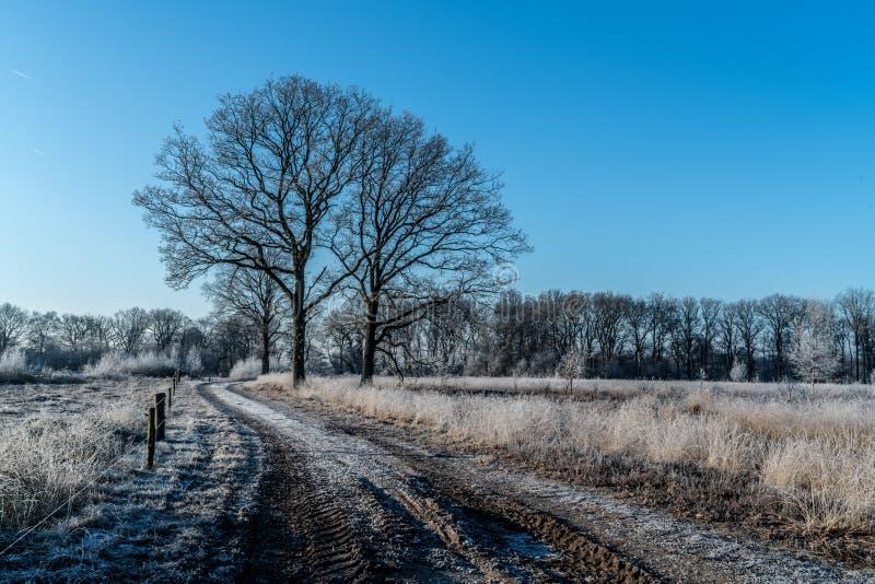 Gefrorene Landschaft stockfotos