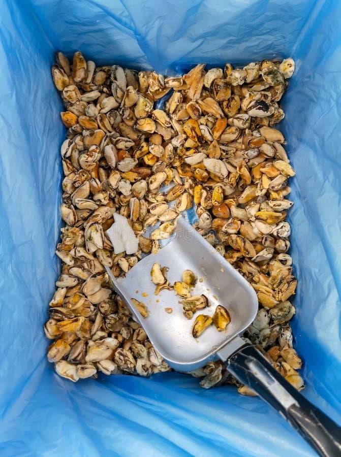 Gefrorene Miesmuscheln auf dem Marktregal lizenzfreie stockfotografie