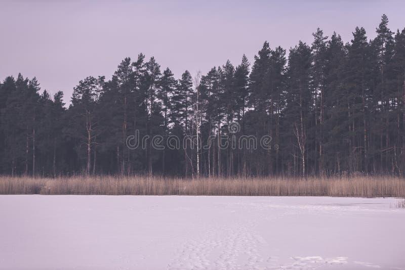 gefrorene nackte Bäume des Waldes in der schneebedeckten Landschaft - Retro- EFF der Weinlese lizenzfreie stockbilder