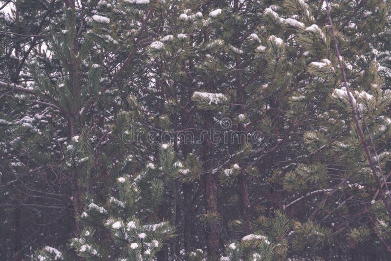 gefrorene nackte Bäume des Waldes in der schneebedeckten Landschaft - Retro- EFF der Weinlese stockfotografie