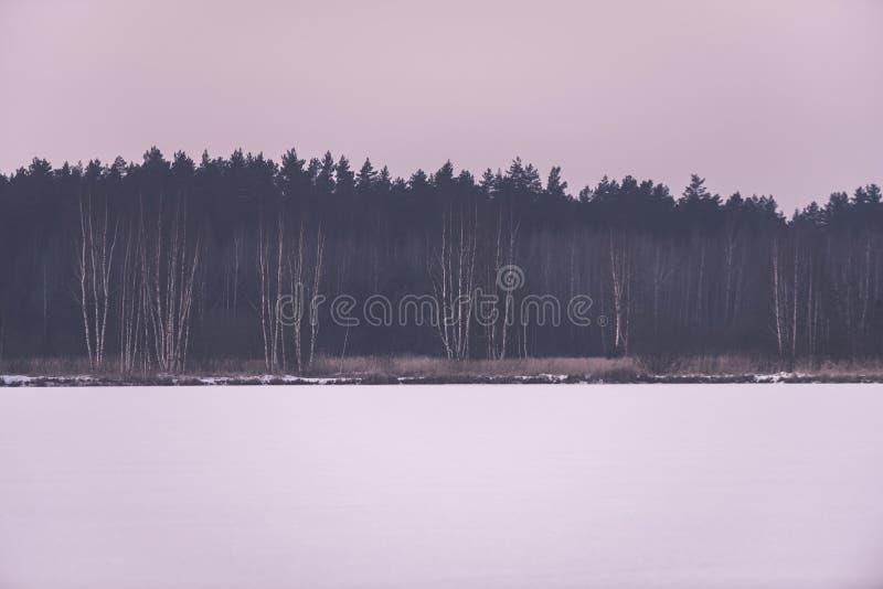 gefrorene nackte Bäume des Waldes in der schneebedeckten Landschaft - Retro- EFF der Weinlese stockfotos