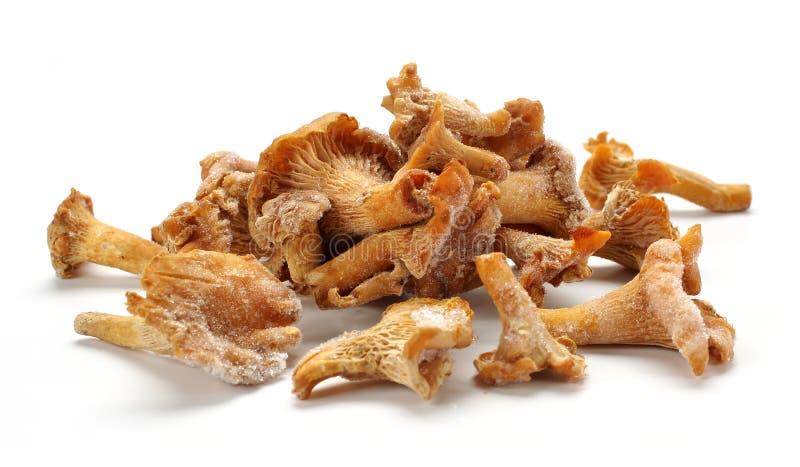 Gefrorene Pilze lizenzfreie stockbilder