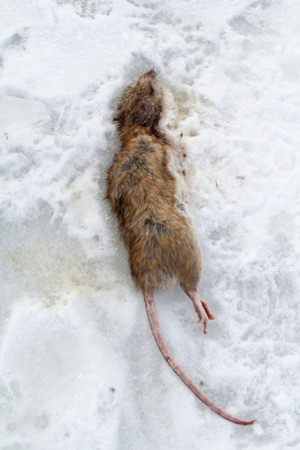 Großzügig Anatomie Der Ratte Fotos - Menschliche Anatomie Bilder ...
