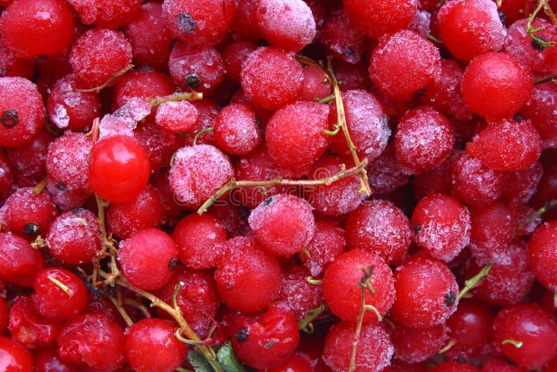 Gefrorene rote Johannisbeeren lizenzfreies stockbild