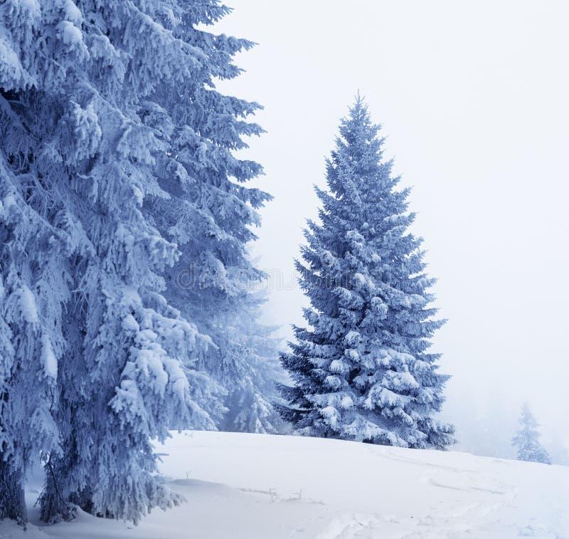 Gefrorene schneebedeckte Tanne im magischen Wald nach Schneefällen stockfotografie