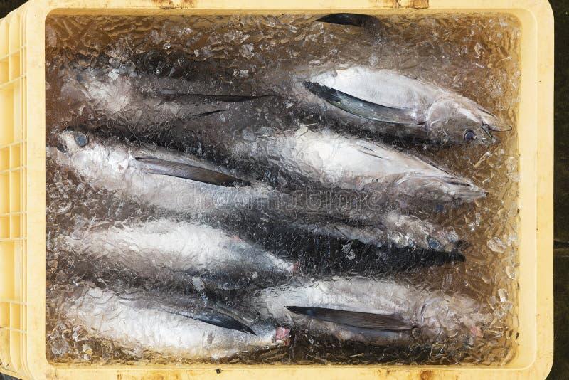 Gefrorene Tuna Fish stockfotos