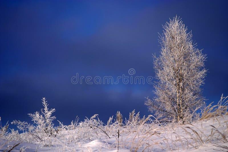 Gefrorener Baum und Gras lizenzfreie stockbilder