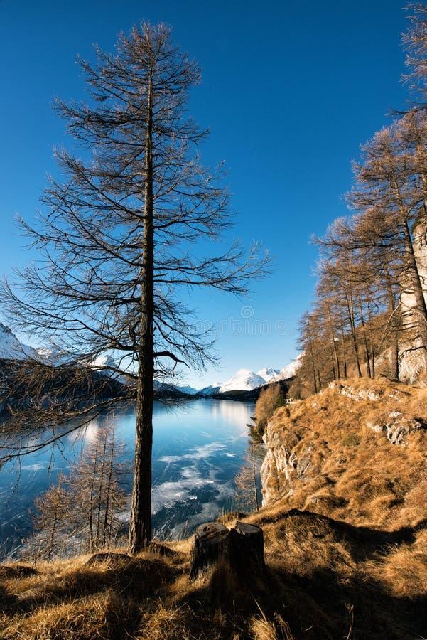 Gefrorener Gebirgssee und -kahler Baum stockbild