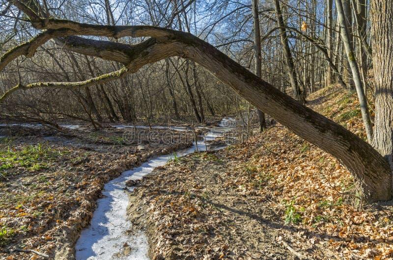 Download Gefrorener Nebenfluss stockbild. Bild von frost, fluß - 47100719