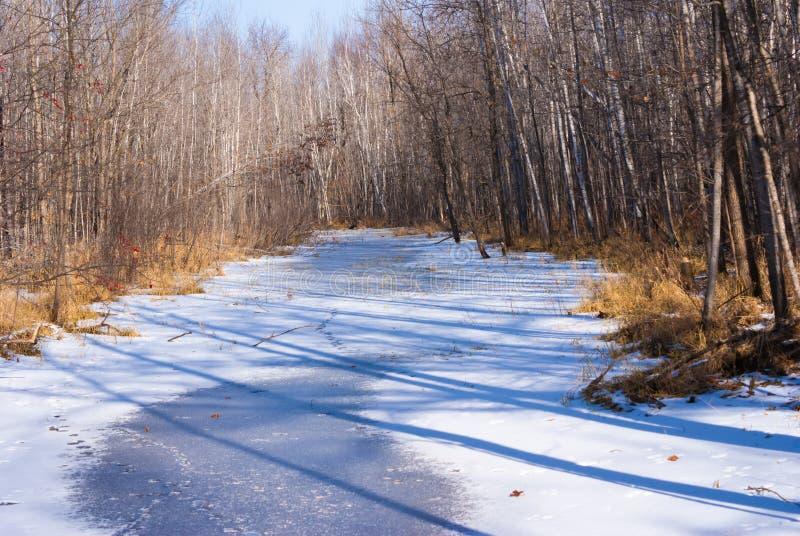 Gefrorener Nebenfluss umgab durch Bäume im November stockbilder