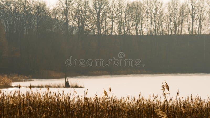 Gefrorener See und ein Stummel eines Baums lizenzfreie stockfotografie