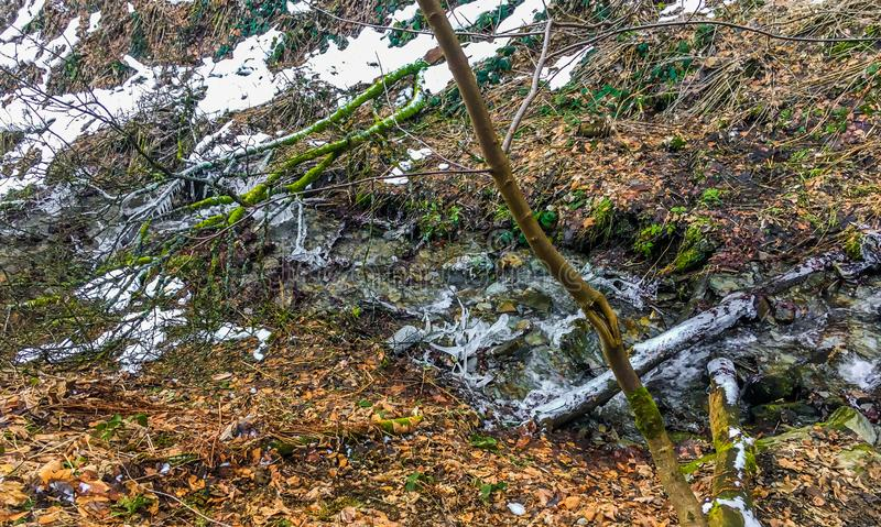 Gefrorener Strom mit Eiszapfen aber in einer Waldlandschaftsszene in der Wintersaison noch völlig strömen lizenzfreies stockbild