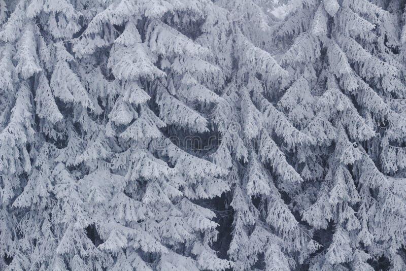 Gefrorener Tannenbaumhintergrund stockfoto