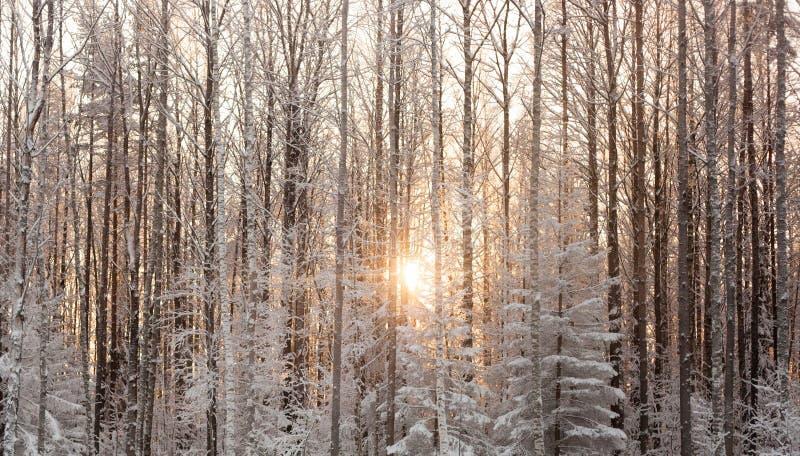 Gefrorener Wald stockbild
