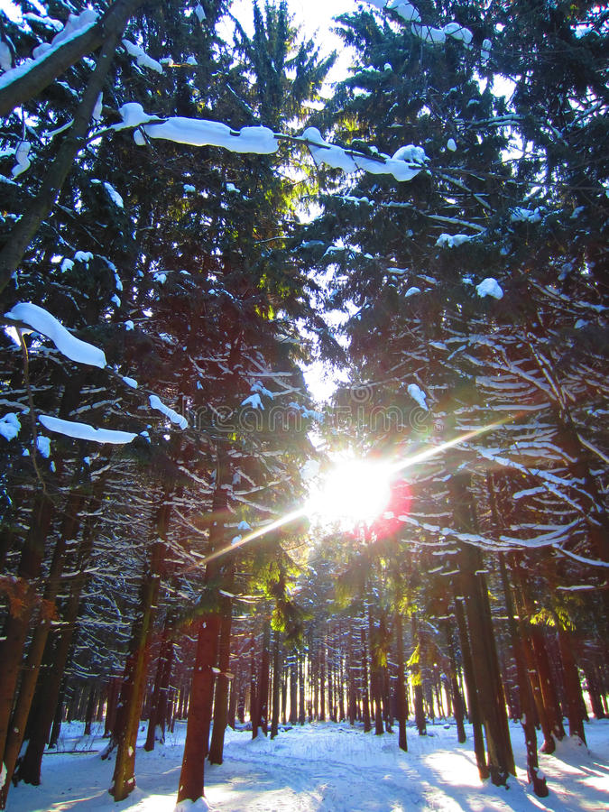 Gefrorener Wald lizenzfreie stockfotografie