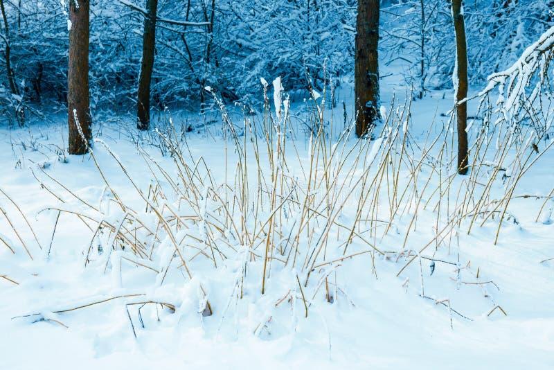Gefrorener Wald mit Schnee stockfoto