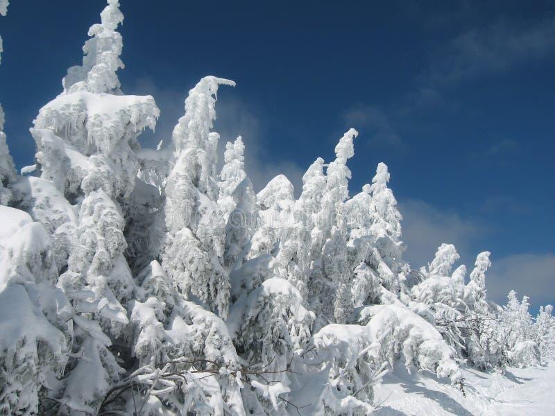 Gefrorener Winter I stockbilder