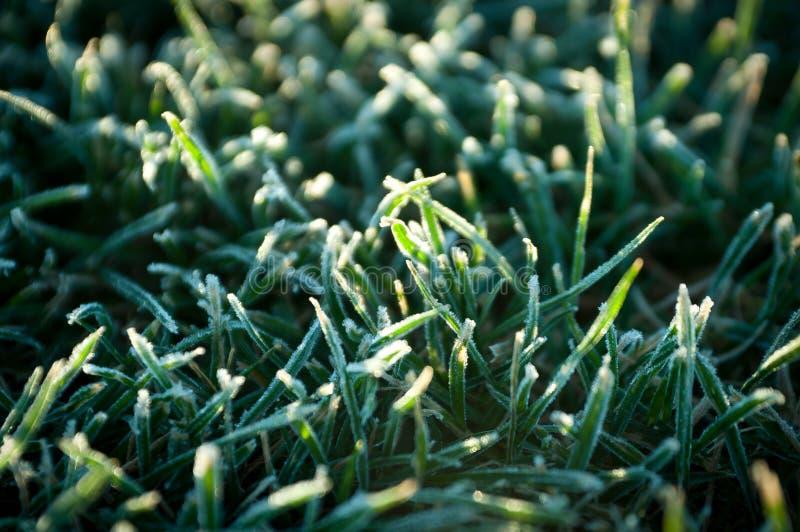 Gefrorenes Gras lizenzfreie stockfotografie