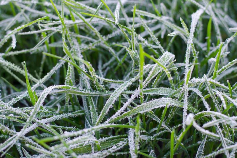 Gefrorenes Gras bedeckt mit Reif lizenzfreies stockfoto