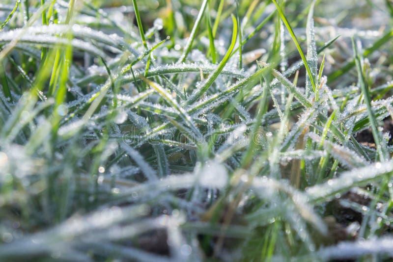 Gefrorenes Gras am Morgenlicht stockbilder