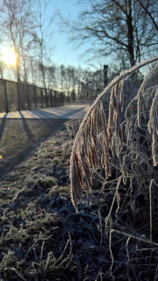 Gefrorenes Gras am Wanderweg, Frozen gras foto de archivo libre de regalías