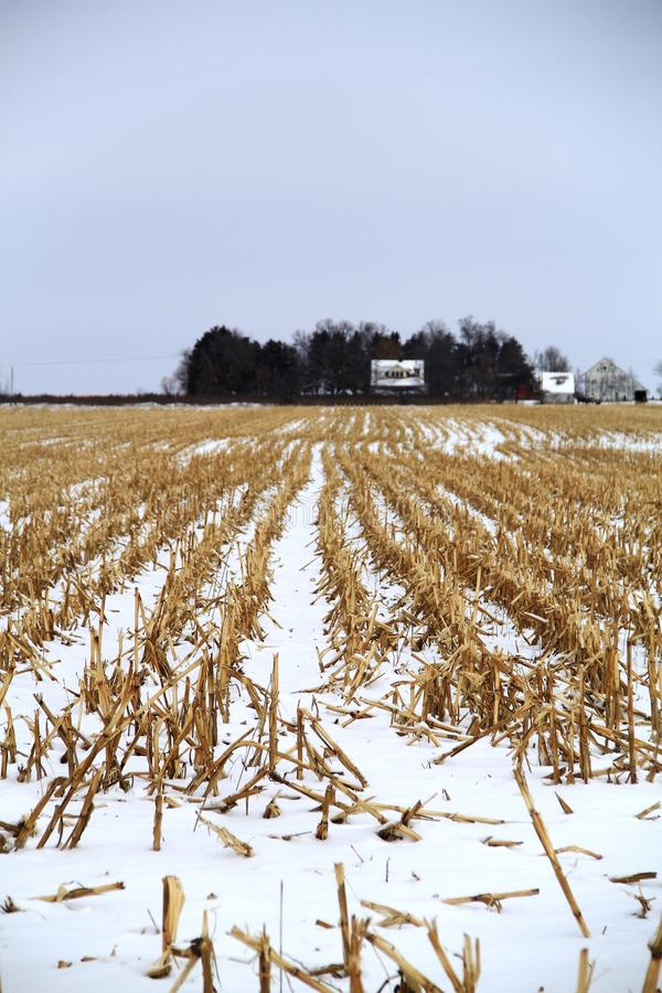 Gefrorenes Mais-Feld lizenzfreies stockfoto