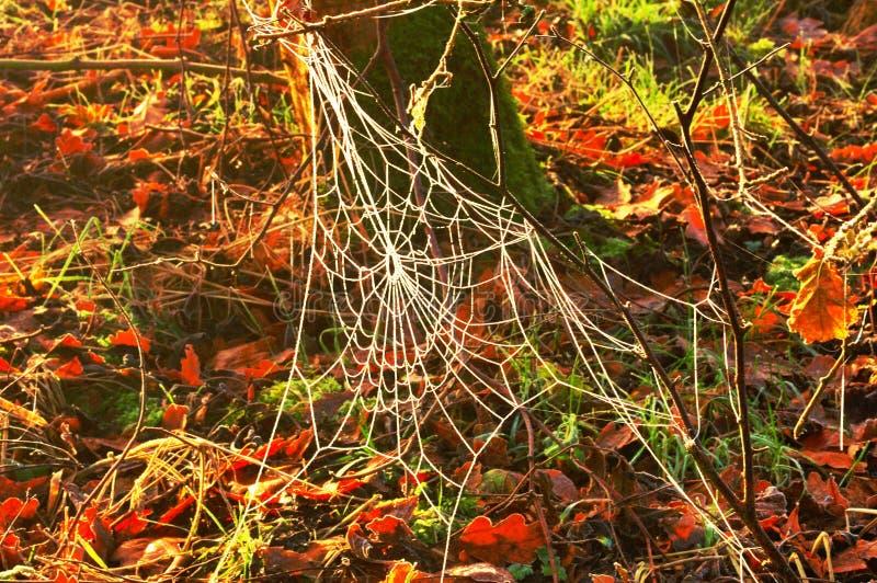 Gefrorenes Spinnen-Web stockfotografie