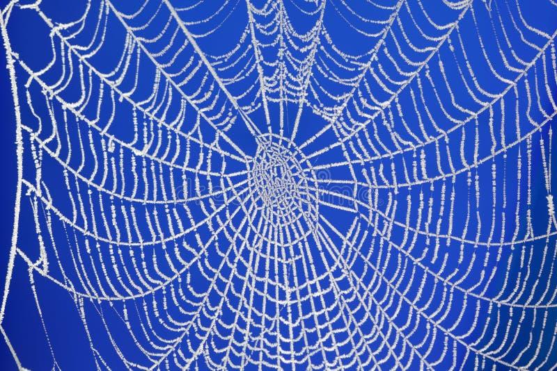 Gefrorenes Spinnenweb lizenzfreies stockbild