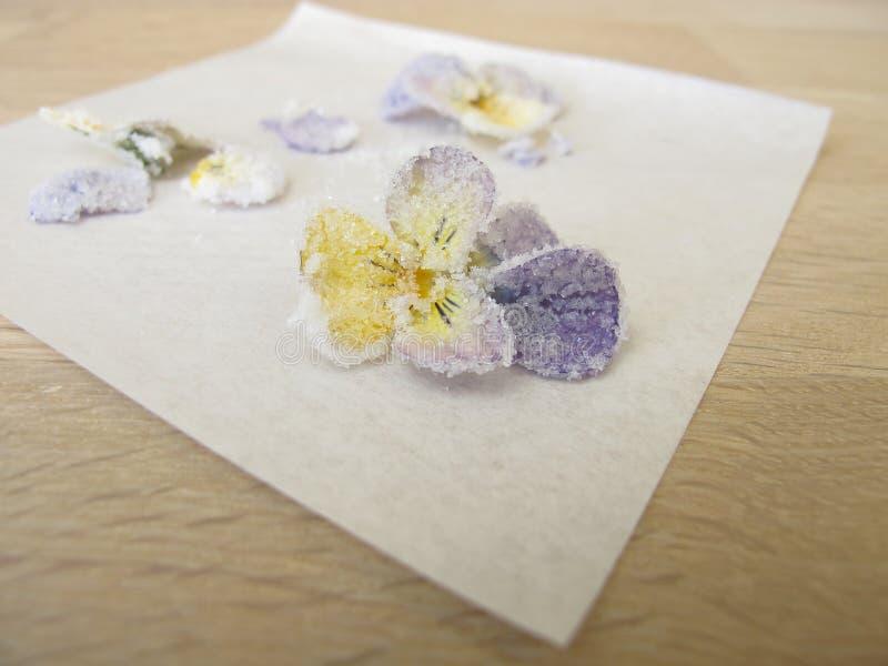 Geglaceerd gehoornd viooltje royalty-vrije stock foto