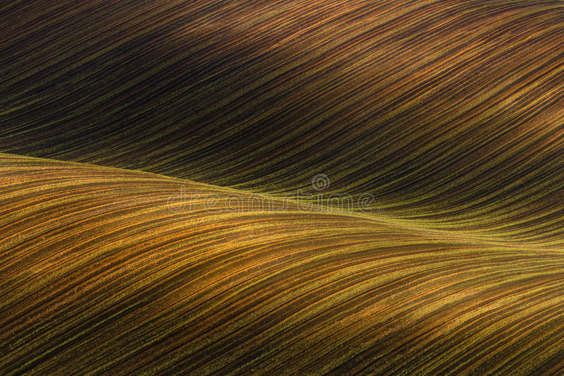 Gegolft Gecultiveerd gebied met mooie licht-schaduwenchiaroscuro Rustiek de herfstlandschap in bruine tonen Het gestreepte kronke stock afbeelding