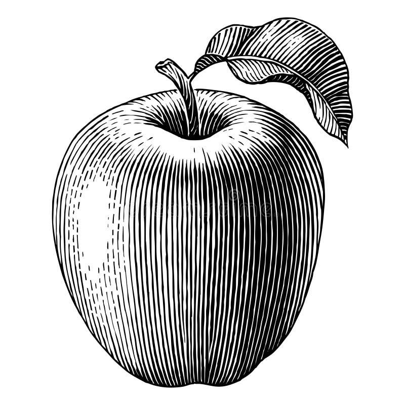 Gegraveerde appel stock illustratie