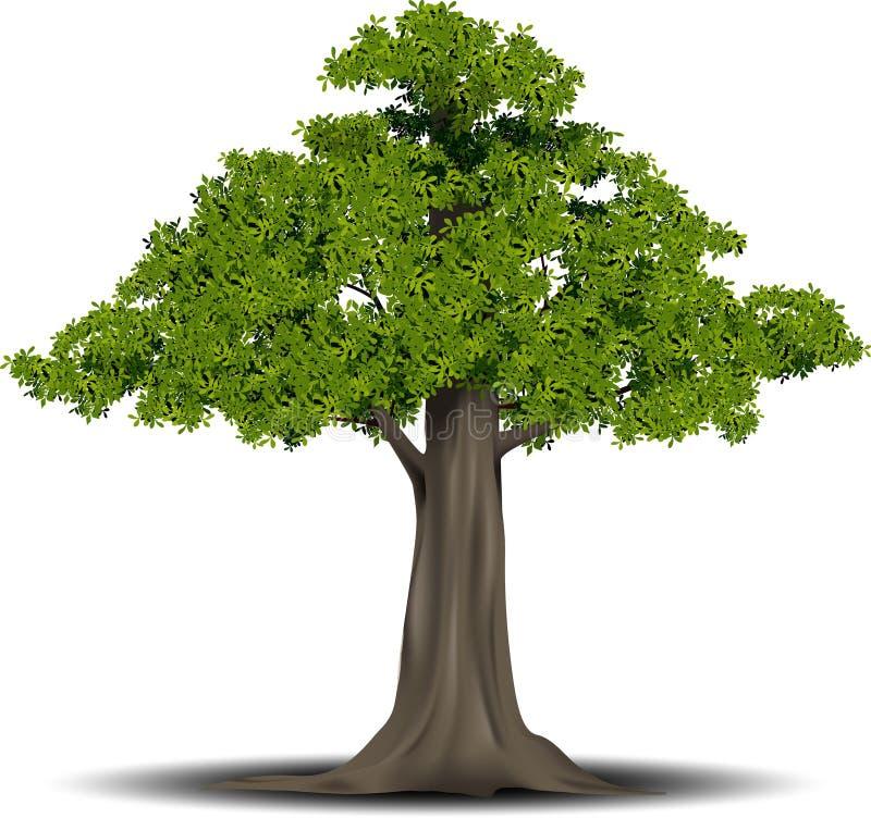 Gegraveerde boom Vectorillustratie van een fruitboom in uitstekende gravurestijl , gegroepeerd royalty-vrije illustratie