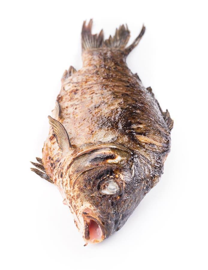 Gegrillte ganze Karpfenfische lizenzfreies stockfoto